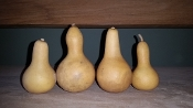 "Cleaned ""Little Guys"" Gourd Special"