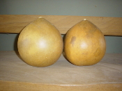 Cleaned Medium Bushel Gourd Special